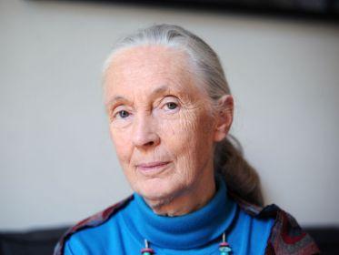 Jane Goodall était à Paris lundi pour un débat sur la biodiversité avec Yves Coppens.